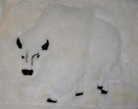 White Buffalo Alpaca Hide