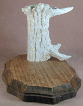 Antler and Wood Knife Stand